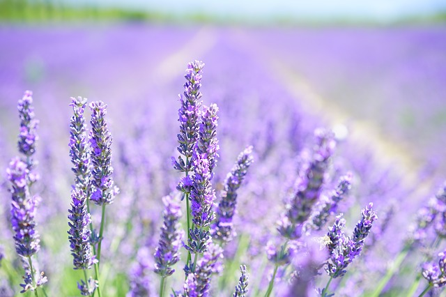 Jurlique - Calendula-Lavender Hydrating Essence -50ml/1.6oz Dermisa Stretch Mark Cream 4  oz