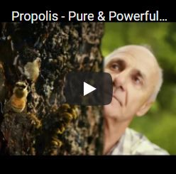 Propolis - Pure & Powerful Immunity Protection