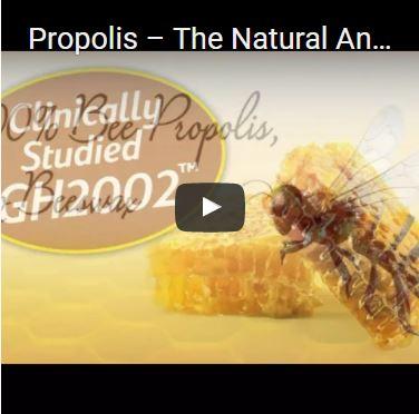 Propolis – The Natural Antibiotic